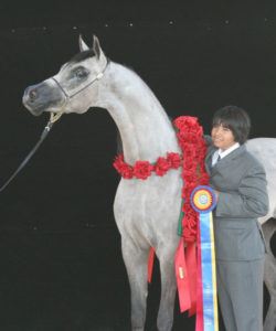 He Be Showy DFA (by Showkayce) 9x National Champion