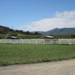 Marashah Arabians Pastures